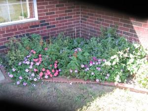 My September/October shady garden