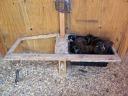 nestbox frame