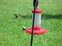 Don't come near my feeder